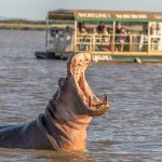 HIPPO & CROC BOAT CRUISE ST LUCIA SOUTH AFRICA