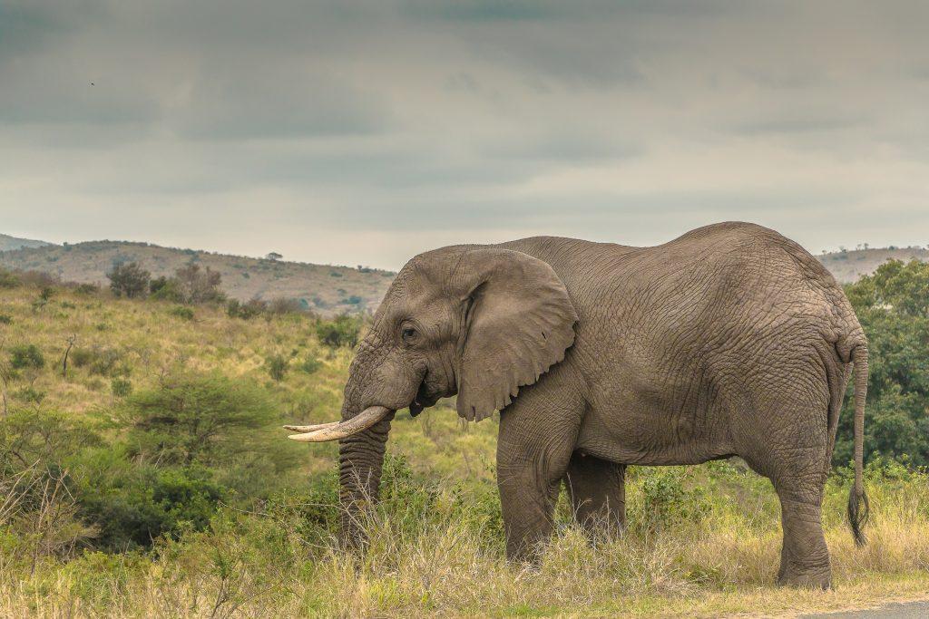 hluhluwe-imfolozi safari tours