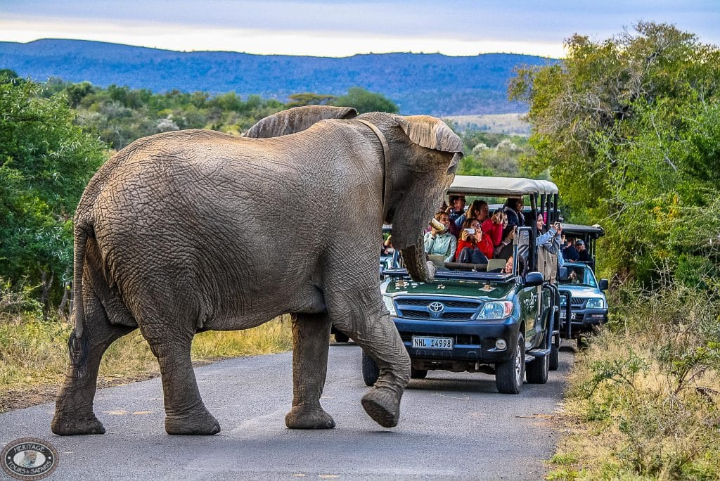 full day hluhluwe-imfolozi park safari