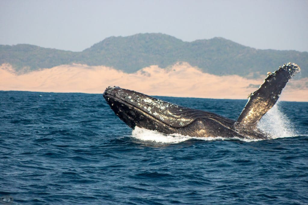 st lucia whale watching