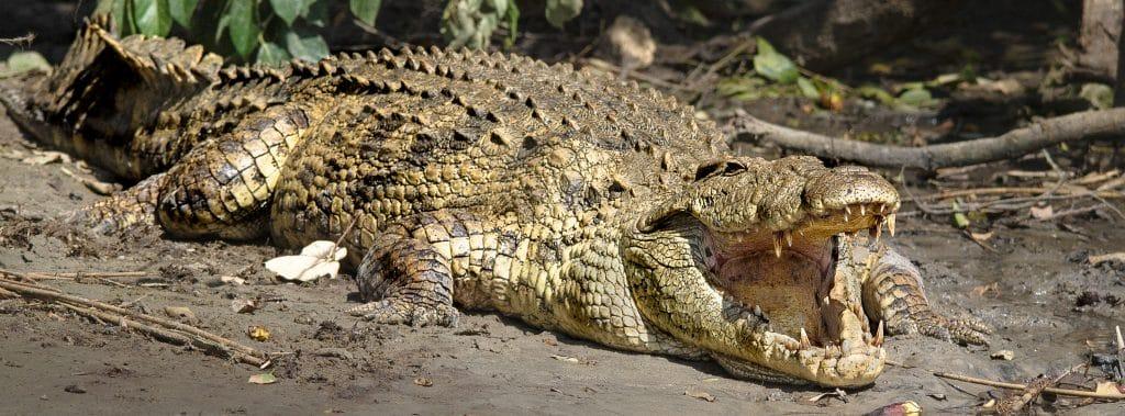 st lucia croc centre